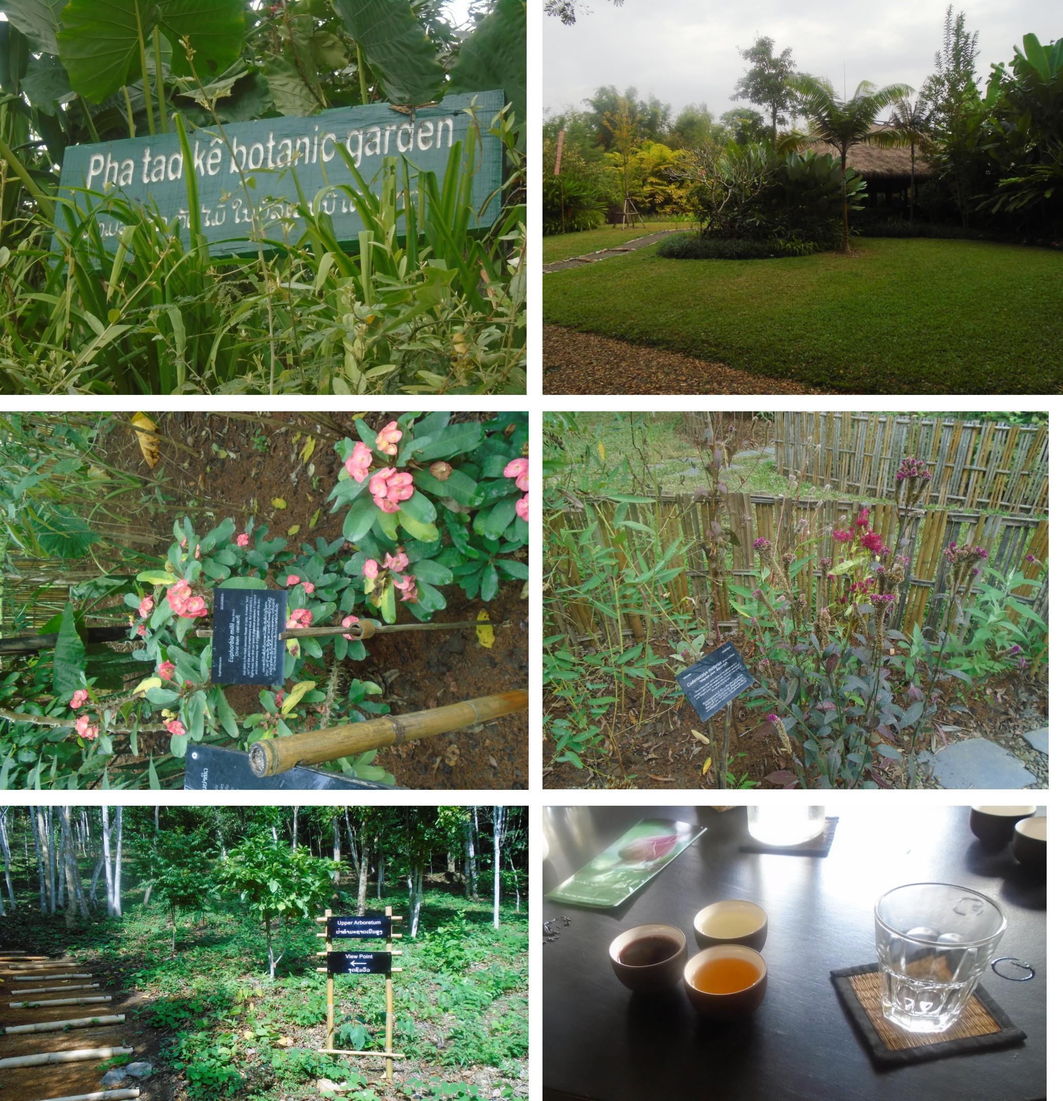 Botanical Garden Final