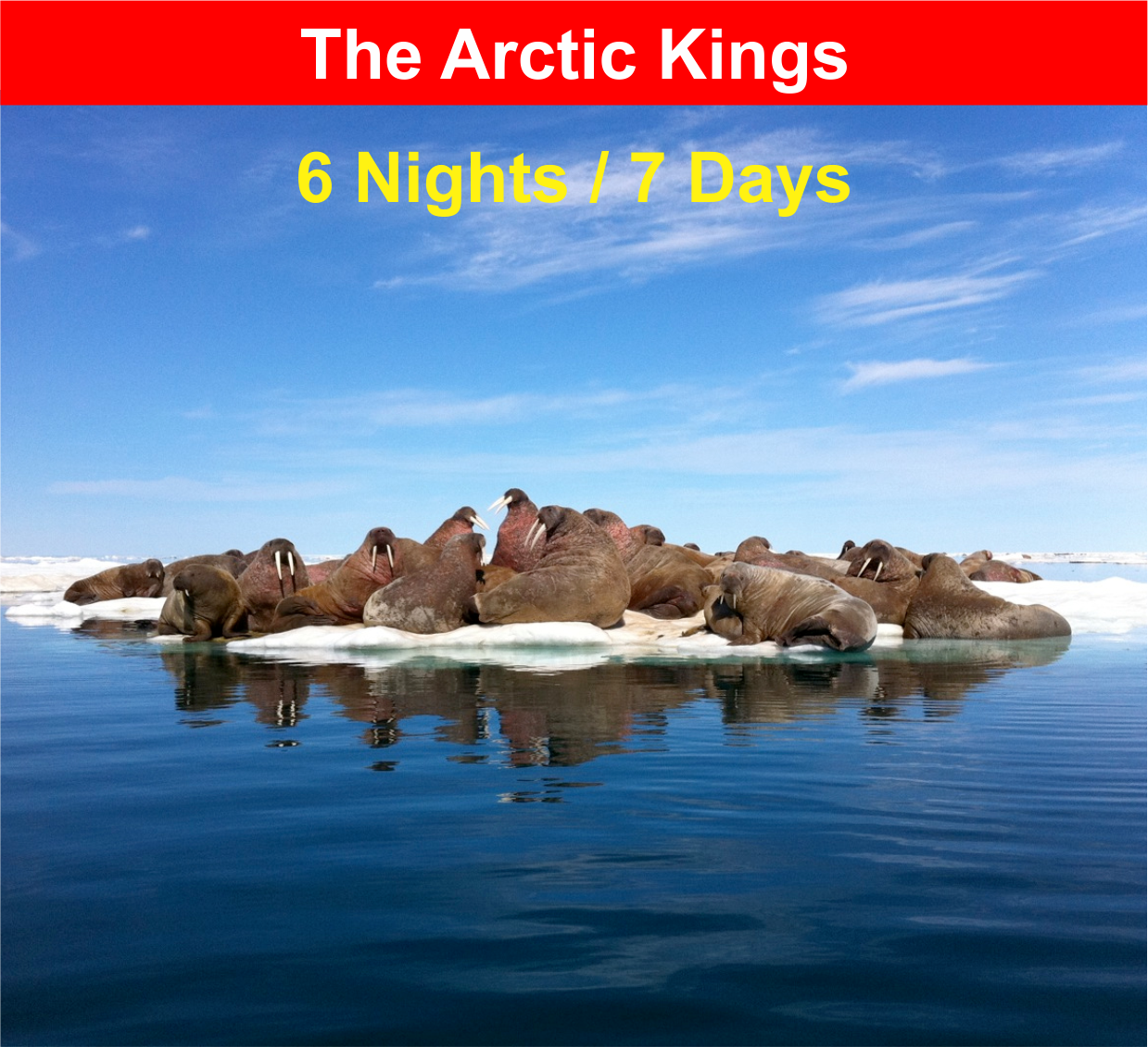 The Arctic Kings
