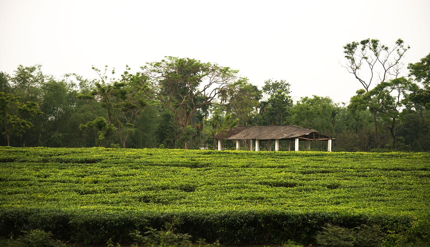 Jorhat - The tea capital of the World