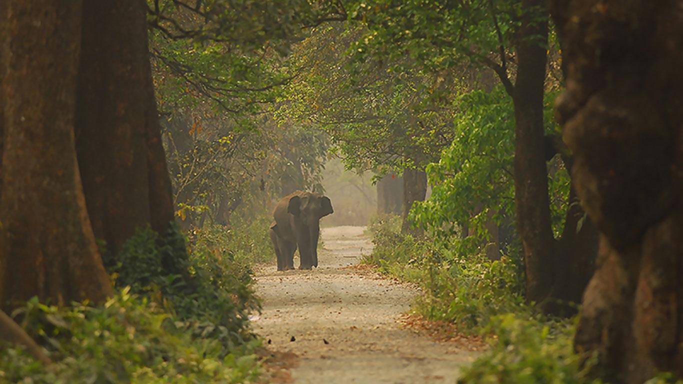 Manas National Park, Assam